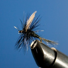 Black-Gnat-(blue-bkgd)