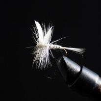 White-Miller